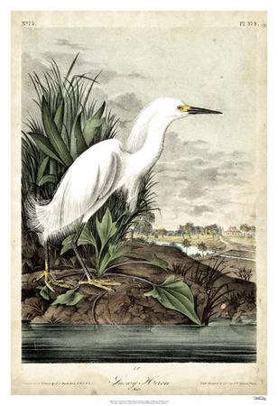 Snowy Heron Giclee Print by John James Audubon
