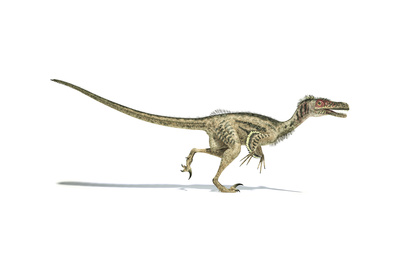 Velociraptor Dinosaur on White Background Prints
