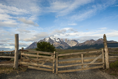 Cattle Gate Photographic Print by Michael Runkel