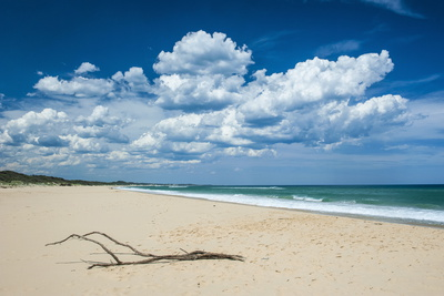 Tree Branch on a Sandy Beach in Cape Conran Coastal Park, Victoria, Australia, Pacific Photographic Print by Michael Runkel