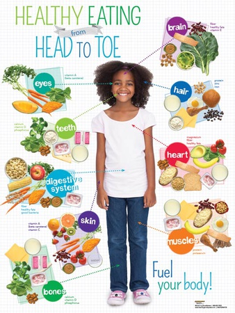 Kid Healthy Eating Head to Toe Poster Posters