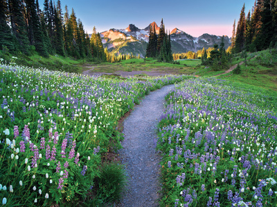 Wildflower Walkway Photographic Print by Dennis Frates