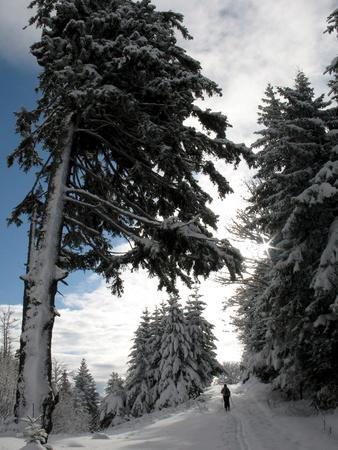 A Women Skis Through the Freshly-Covered Mountainside Photographic Print by Arno Balzarini