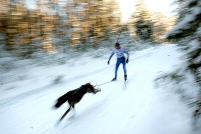 A Husky Pulls His Musher During a Race Near the Village of Duboshi Some Km from Minsk Photographic Print by Tatyana Zenkovich