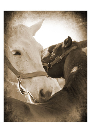 Horse's Kiss Sepia 2 Prints by Suzanne Foschino