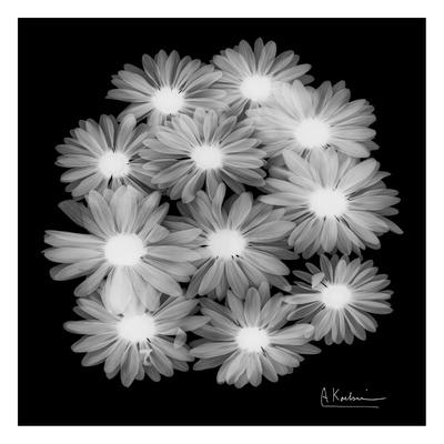 Margarithe X-Ray Poster by Albert Koetsier