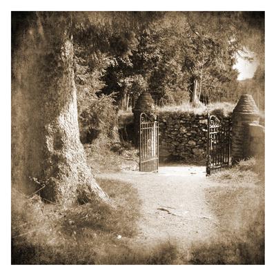 Wicklow Tree Line 2 Art by Suzanne Foschino