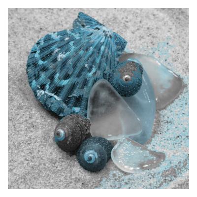 Blue Shells Print by Tony Pazan