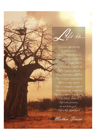 Baobab Life 2 Posters by Tony Pazan