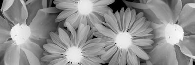 More Blossoms Posters by Albert Koetsier