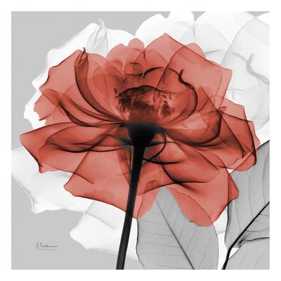 Rose on Gray 1 Posters by Albert Koetsier