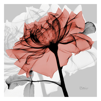 Rose on Gray 2 Prints by Albert Koetsier