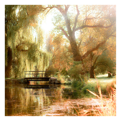 Willows Art by Tracey Telik