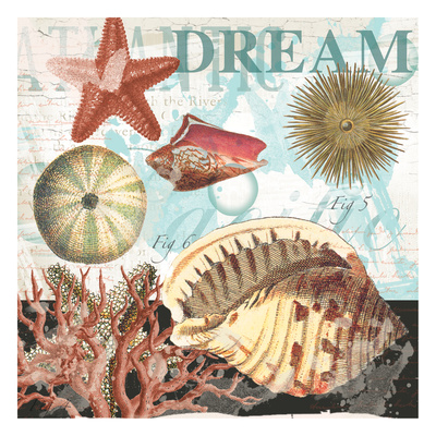 Coral Dream Shells Art by  Ophelia & Co.