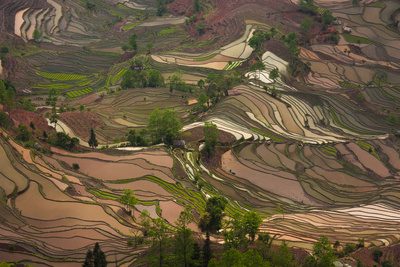 Yuang Yang Lámina fotográfica por Art Wolfe