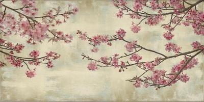 Cherry Blossoms Posters by John Seba