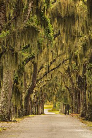 USA, Georgia, Savannah, Entrance drive to Bethesda School in Savannah. Photographic Print by Joanne Wells