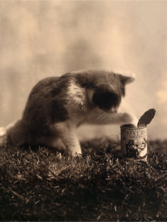 Kitten Playing with Canned Food Posters