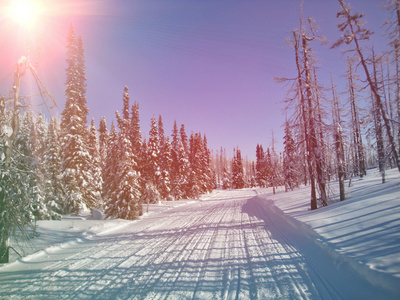 Snowmobile Trail in Labrador Canada Photographic Print by  melking