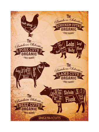 Diagram of Cut Carcasses Chicken, Pig, Cow, Lamb Art by  111chemodan111