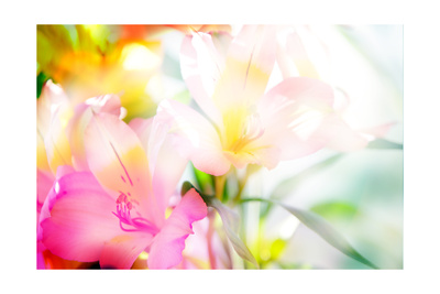 Beautiful Flowers Made with Color Filters Art by Timofeeva Maria