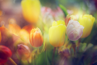 Flowers in Color Filters Photographic Print by Timofeeva Maria