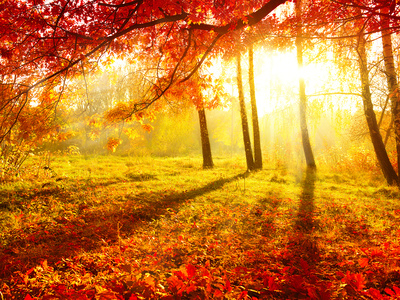 Autumn Trees and Leaves Photographic Print by Subbotina Anna