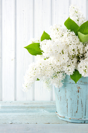 White Lilac Spring Flowers in a Blue Vase Photographic Print by Anna-Mari West