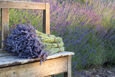 Bouquets on Lavenders on a Wooden Old Bench Photographic Print by Anna-Mari West