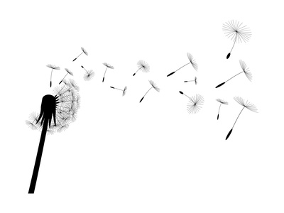 Blow Dandelion Prints by  losw