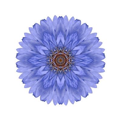 Blue Chrysanthemum Mandala Flower Kaleidoscope Poster by  tr3gi