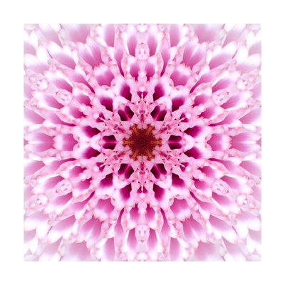 Pink Concentric Flower Center: Mandala Kaleidoscopic Design Prints by  tr3gi