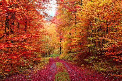 Magnificent Autumn Colors Forest in October Photographic Print by  Fotozickie