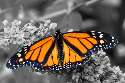 Brilliant Butterfly Photographic Print by  Beth B.