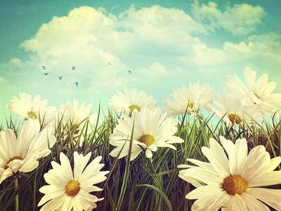 Vintage Look of Summer Daisies in Grass Photographic Print by  Sandralise