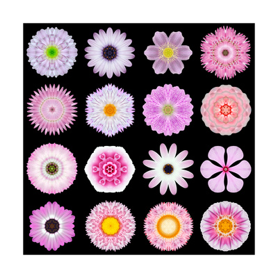Big Collection of Various Pink Pattern Flowers Print by  tr3gi