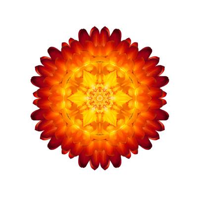 Kaleidoscopic Strawflower Mandala Print by  tr3gi