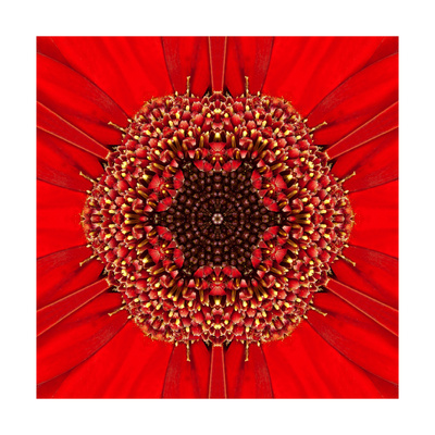 Red Concentric Flower Center: Mandala Kaleidoscopic Design Prints by  tr3gi