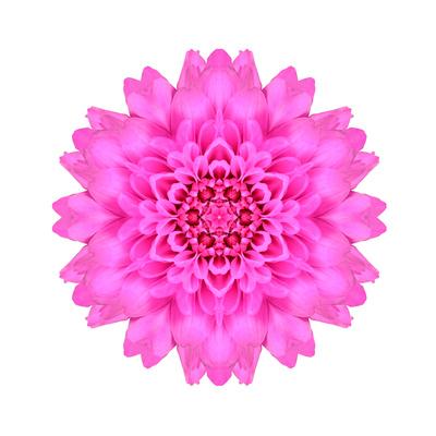 Kaleidoscopic Chrystanthemum Flower Mandala Poster by  tr3gi