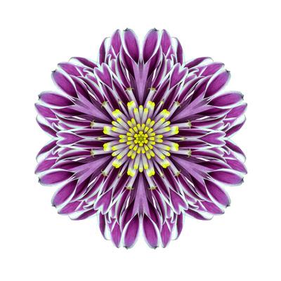 Kaleidoscopic Chrystanthemum Flower Mandala Prints by  tr3gi