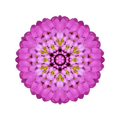 Pink Kaleidoscopic Flower Mandala Prints by  tr3gi