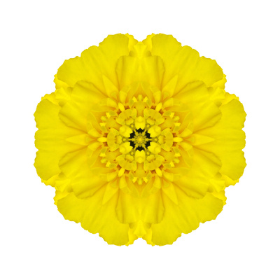 Yellow Concentric Marigold Mandala Flower Posters by  tr3gi