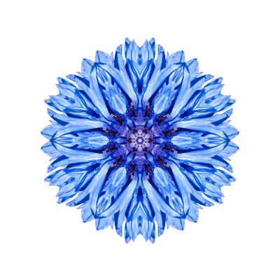 Blue Cornflower Mandala Flower Kaleidoscope Posters by  tr3gi