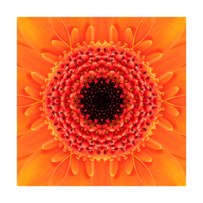 Orange Concentric Flower Center: Mandala Kaleidoscopic Design Prints by  tr3gi