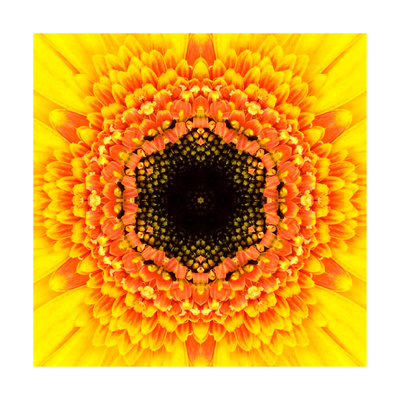 Yellow Concentric Flower Center: Mandala Kaleidoscopic Design Posters by  tr3gi