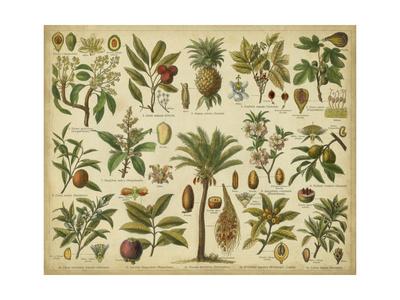Classification of Tropical Plants Kunstdruck von  Vision Studio