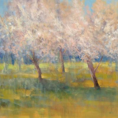 Cherry Blossoms Prints by Simon Addyman