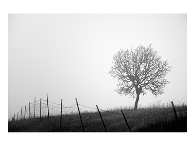 Tree and Fence III Prints by Shane Settle