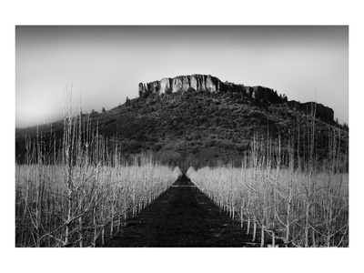 Table Rock Field Prints by Shane Settle