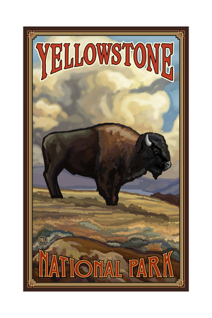 Yellowstone Bison Prints by Paul A Lanquist